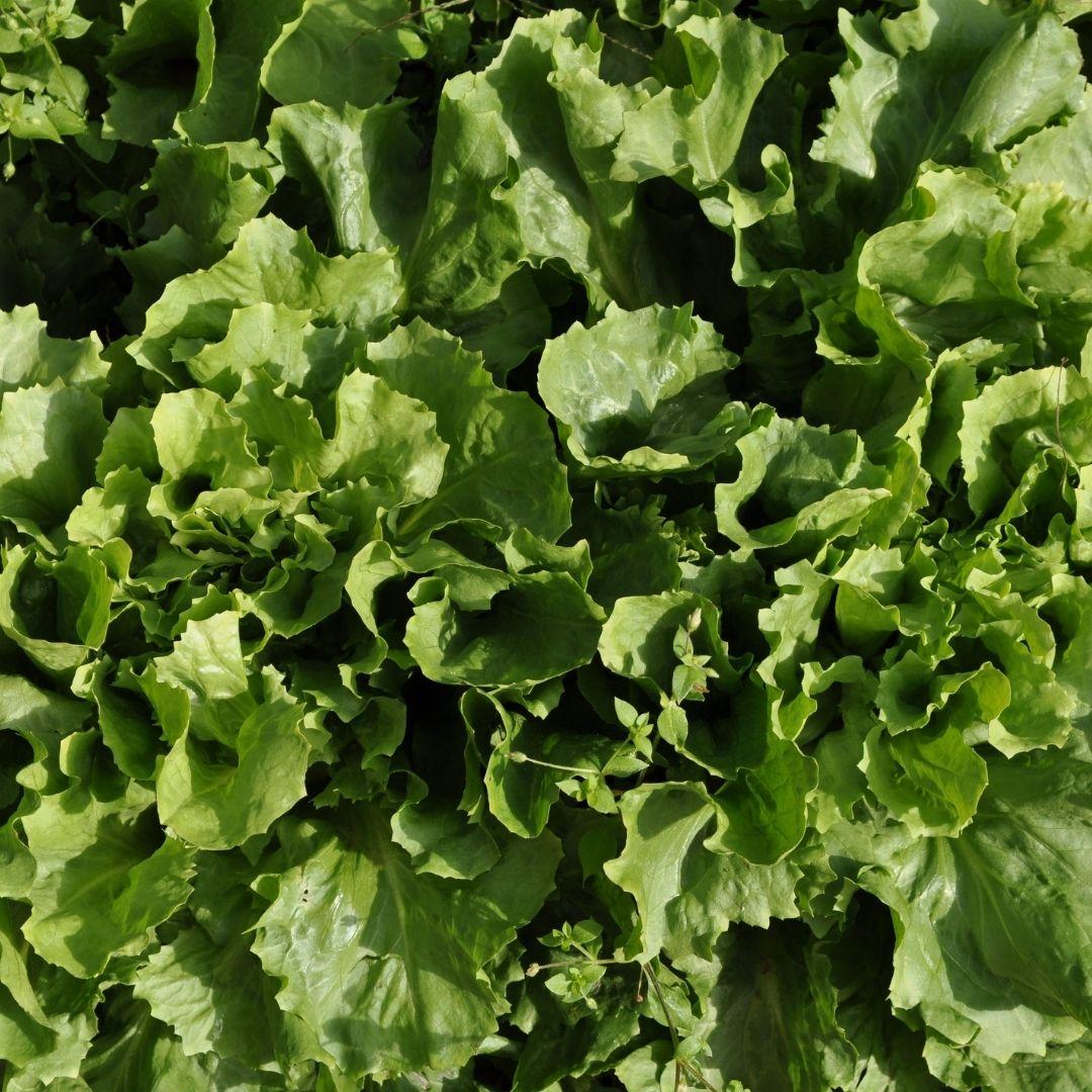 raconter-des-salades